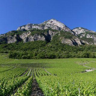 Vignobles de Chignin