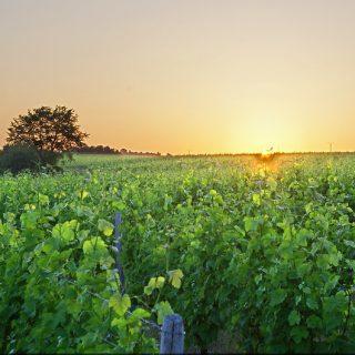 Vinogbles Val de Loire